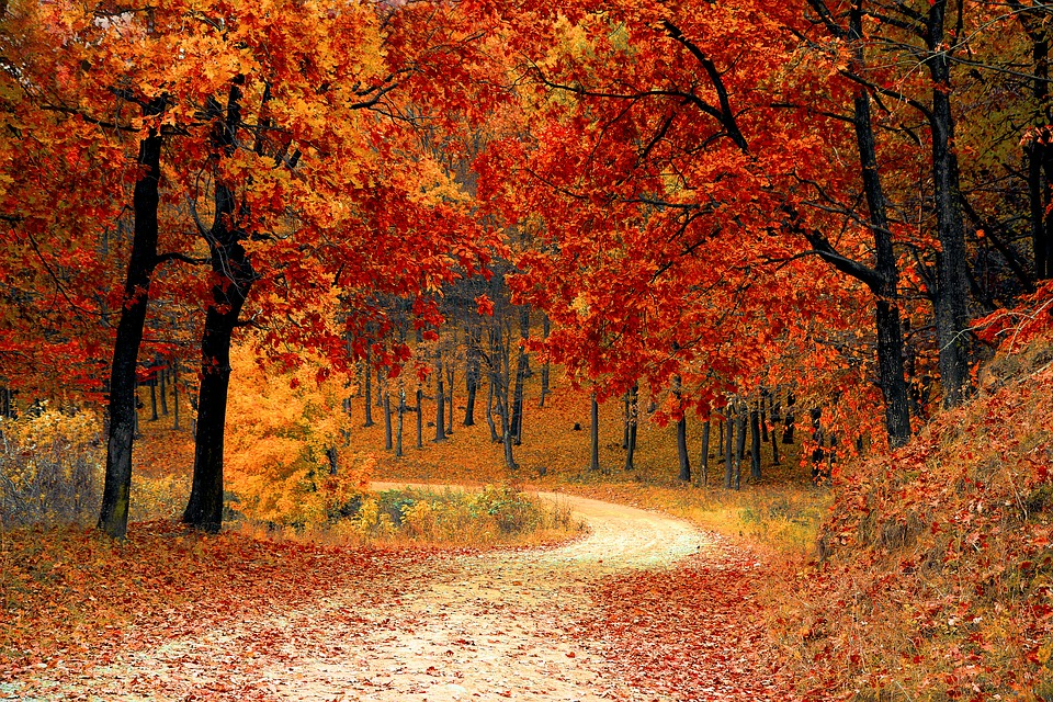 image automne.jpg (0.4MB)
