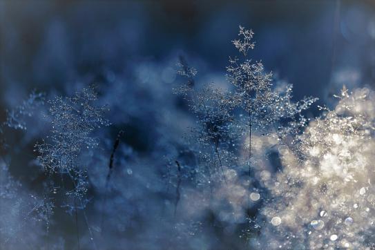image hiver.jpg (0.2MB)