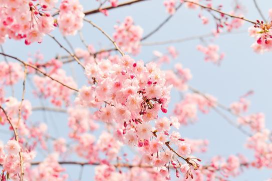 image printemps.jpg (0.1MB)
